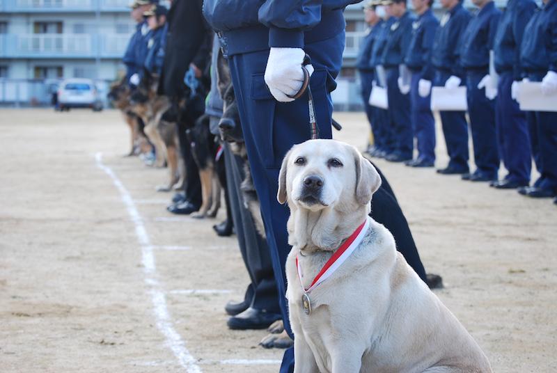 警察犬きな子の写真