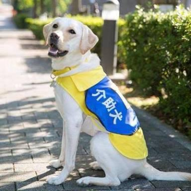 介助犬の写真