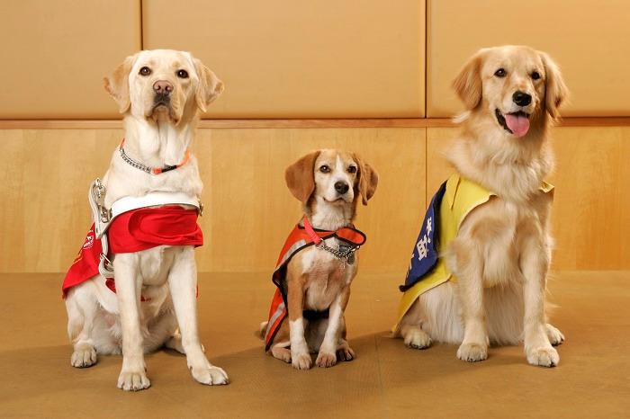 補助犬の写真