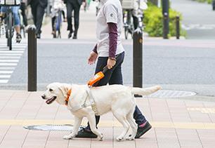 盲導犬の写真